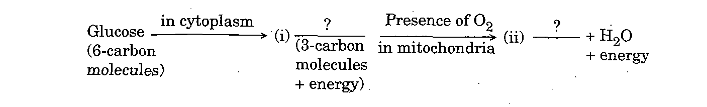 Question 19 Digram CBSE Class 10 Science Paper 2020